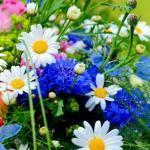 Купить цветы по выгодной цене