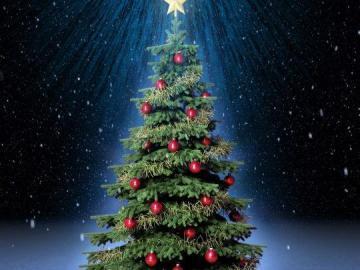 Какую елку купить на Новый Год