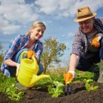 Предотвращение кожных заболеваний при работе в саду
