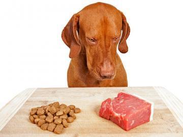 Большой выбор качественного питания для животных