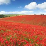 Экспертная оценка земельного участка - определение стоимости земли