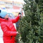 Как поставить живую елку дома и не получить штраф?