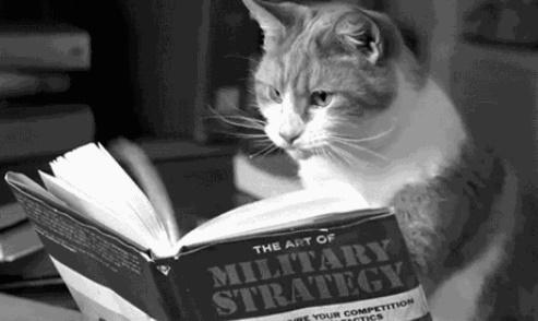 Насколько собаки умнее кошек