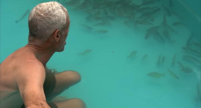 Видео: Что будет, если прыгнуть в бассейн с пираньями