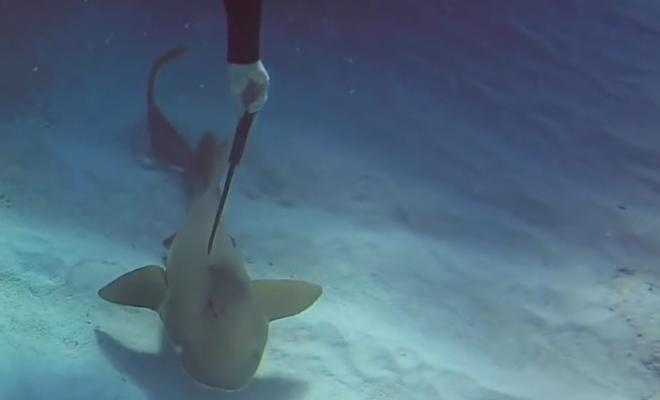 Акула с ножом попросила помощи у дайвера и он рискнул