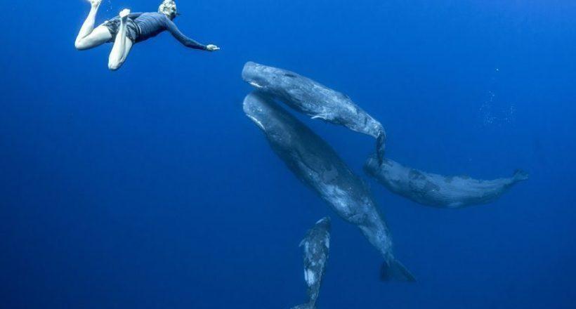 Танец с кашалотами: российский фотограф запечатлел восхитительное шоу с китами