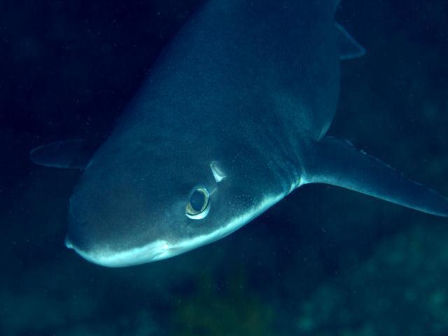 Акулы Балтийского моря: чем они опасны для человека