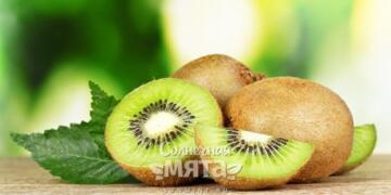 Польза и вред от ежедневного употребления плодов киви
